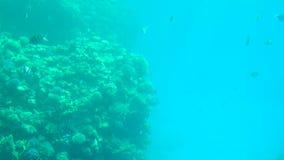 Coral Reef och tropisk fisk i solljus lager videofilmer