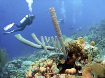 Free Coral Reef Off Aruba W/ Large Tube Sponges Royalty Free Stock Images - 187023839