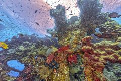 Coral reef off coast of Bali Royalty Free Stock Photo