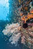 Coral reef off coast of Bali Stock Images