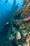 Coral reef off coast of Bali Stock Photo