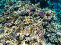 Coral reef off the coast of Gee island in Ouvea lagoon, Loyalty Islands, New Caledonia. The lagoon was listed as Unesco World Heritage site in 2008 stock photography