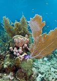 Coral reef off Roatan Stock Image