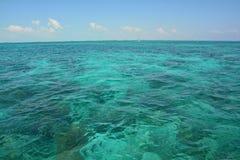 Coral Reef op Caye-Breeuwijzereiland Belize stock foto