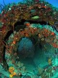 Coral Reef op Wrak Stock Fotografie