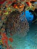 Coral Reef op Wrak Royalty-vrije Stock Afbeelding