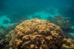 Coral Reef på den Lipe ön i Thailand Arkivfoton