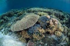 Coral Reef Pacifique colorée Photographie stock libre de droits