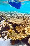 Coral reef and paddle underwater. Coral reef and paddle at South Ari Atoll, Maldives Stock Photos