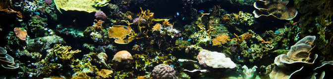Coral reef panorama stock photos