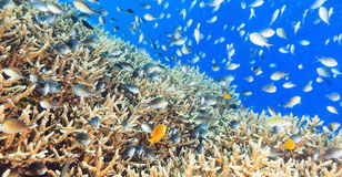 Coral reef panorama stock images