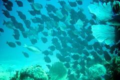 Coral Reef, peixes tropicais e vida do oceano no mar das caraíbas Imagem de Stock