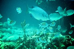 Coral Reef, peixes tropicais e vida do oceano no mar das caraíbas Foto de Stock Royalty Free