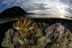 Coral Reef peu profonde en parc national de Komodo, Indonésie photographie stock