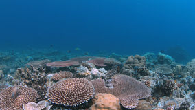 Coral reef in Philippines stock photo