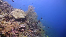 Coral reef in Philippines. Colorful coral reef in Philippines stock footage