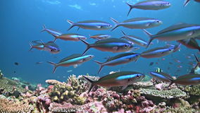 Coral reef in Philippines stock video