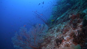 Coral reef in Philippines stock video footage