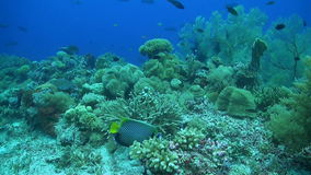 Coral reef with plenty fish. Colorful coral reef with plenty fish stock video