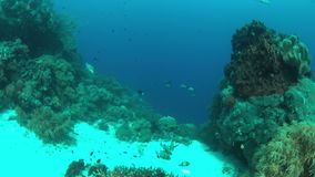 Coral reef with plenty fish. Colorful coral reef with healthy corals and plenty fish. 4k footage stock video