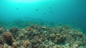 Coral reef with plenty fish. Colorful coral reef with healthy corals and plenty fish. 4k footage stock footage
