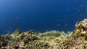 Coral reef with plenty fish 4k. Colorful coral reef with plenty fish 4k footage stock video