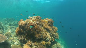 Coral reef with plenty fish 4k. Colorful coral reef with plenty fish. 4k footage stock video
