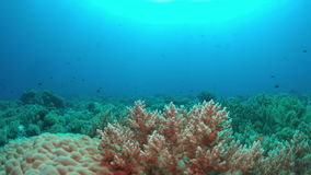 Coral reef with plenty fish 4k. Colorful coral reef with healthy corals and plenty fish. 4k footage stock footage