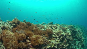 Coral reef with plenty fish 4k. Edge of a colorful coral reef with healthy corals and plenty fish. 4k footage stock footage