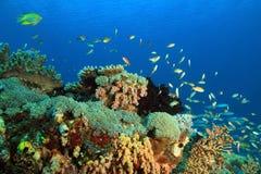 Coral Reef Raja Ampat. Colorful Coral Reef against Blue Water. Gam, Raja Ampat, Indonesia stock photo