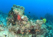 Coral reef in Raja Ampat. Tiny fishes swimming around corals on coral reef in Raja Ampat, Papua Barat, Indonesia stock photography