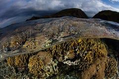 Coral Reef rasa no parque nacional de Komodo fotos de stock royalty free