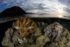 Coral Reef rasa no parque nacional de Komodo, Indonésia fotografia de stock