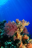 Coral Reef in the Red Sea Stock Images