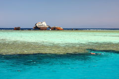 Coral Reef (Red Sea) Royalty Free Stock Photography