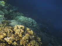 Coral reef in the Red Sea. Stock Photo