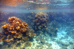 Coral reef in Red sea royalty free stock photos