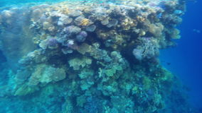 Coral reef in the Red Sea.  stock footage