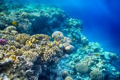 Coral reef and  of the red sea. Beautiful and diverse  coral reef  of the red sea Royalty Free Stock Photo
