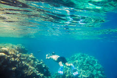 Coral reef  of the red sea. Beautiful and diverse  coral reef and fish of the red sea Stock Photos