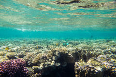 Coral reef  of the red sea Royalty Free Stock Photo