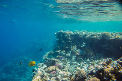 Coral reef  of the red sea. Beautiful and diverse  coral reef and fish of the red sea Royalty Free Stock Image