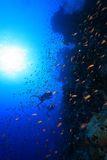 Coral reef in the Red sea. Colorful fish and scuba divers in the red sea Royalty Free Stock Photography