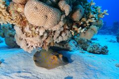 Coral Reef at the Red Sea, Egypt stock photos