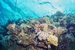 Coral Reef at the Red Sea, Egypt stock photography
