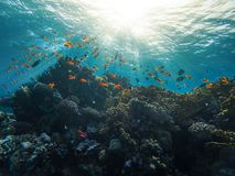 Coral reef red sea Egypt Marsa Alam. From the bottom up Royalty Free Stock Photography