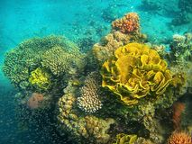 Coral reef in the Red Sea, Eilat, Israel Stock Photography