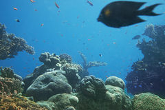 Coral reef of Red Sea. Eilat, Israel Stock Photo