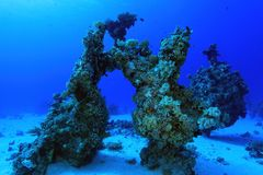 Coral reef in the red sea. Coral structure in the tropical reef of the red sea Royalty Free Stock Image