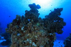 Coral reef in the red sea. Coral structure in the tropical reef of the red sea Royalty Free Stock Photo
